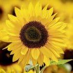 La crise des «gilets jaunes» ou l'inculture économique